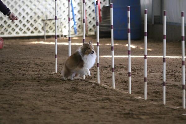 Saturday Standard 4,5,C small dogs