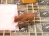 20091224-161814dscf6958_4638937050_o