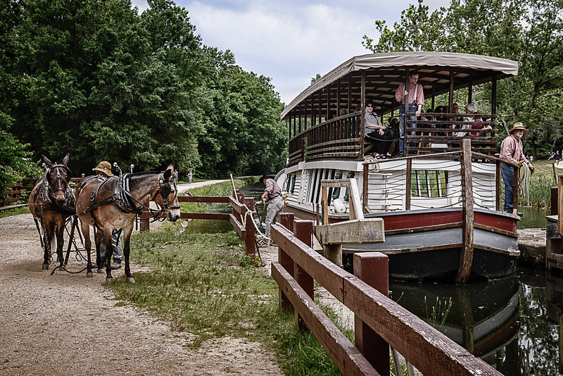 Mule team and drivers pulling Charles F Mercer, Great Falls Tavern, C&O Canal, Potomac, Maryland