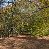 Autumnal colours at Trimpley