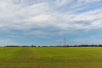 Reedham Fields