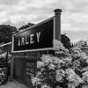 Hydrangeas at Arley