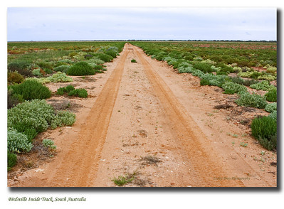 Road to Birdsville along the Birdsville Inside Track through the Sturt Stony Desert.  This usually desolate track is lined with  brilliant green vegetation from the 2010 rains.   Photographed September 2010 - © 2010 Lesley Bray Photography - All Rights Reserved.  Do not remove my signature from this image. Sharing only with credit please.