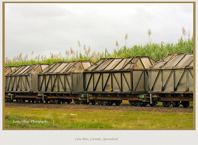 Cane train with bins full of raw sugar on the Halifax Lucinda Point Road heading to Lucinda Bulk Sugar Terminal at Port Lucinda, Queensland, Australia.  Photographed July 2010 - © 2010 Lesley Bray Photography