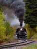 DSRR, CO./Sep. Steam locomotive #473 chugs through the colorful autumn forest along the 46 mile journey from Durango to Silverton CO.