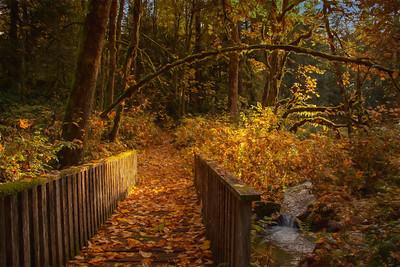 Fall Bridge Pathway O Creek Monet Impression