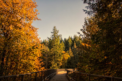 Snoqualmie Valley Trail Tokul Creek Bridge Fall 10-14-18