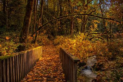 Fall Bridge Pathway O Creek