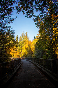 Sno Valley Trail Fall Tokul Creek Bridge Portrait 10-14-18