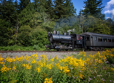 Steam Train Goldenrod Blooming