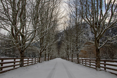 Country Farm Driveway on a Snowy Day