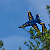 Blue Angels Out of The Trees in my Backyard