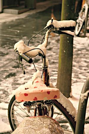 Harts in Snow. Antwerpen, Belgium.