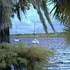 St. Johns River from Crystal Cove Marina,