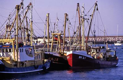 TrBoatFishCom1880600-15