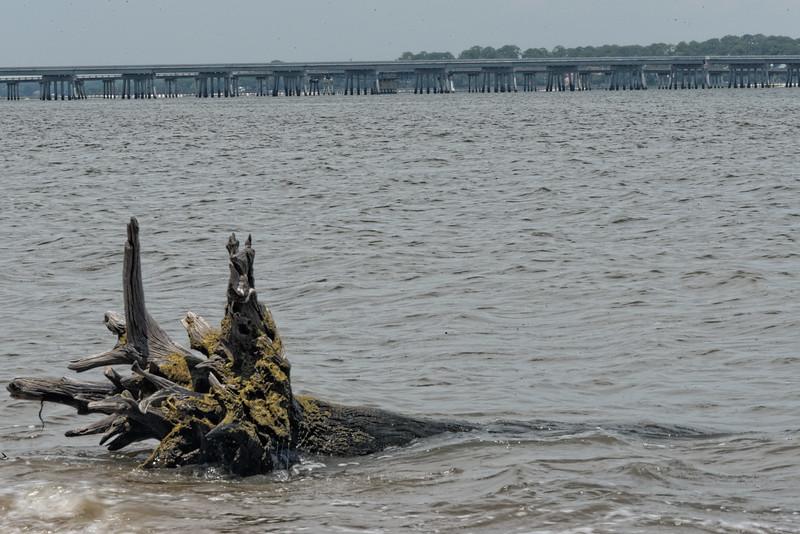 Driftwood on Big Talbot Island