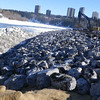 "South side: rock ""riprap"" (used to prevent erosion) placement, February 2013."