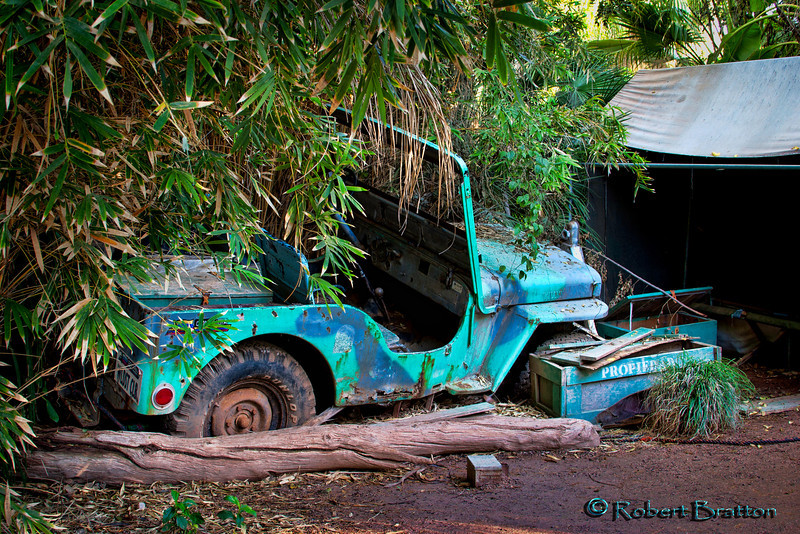 Jeep in the Jungle
