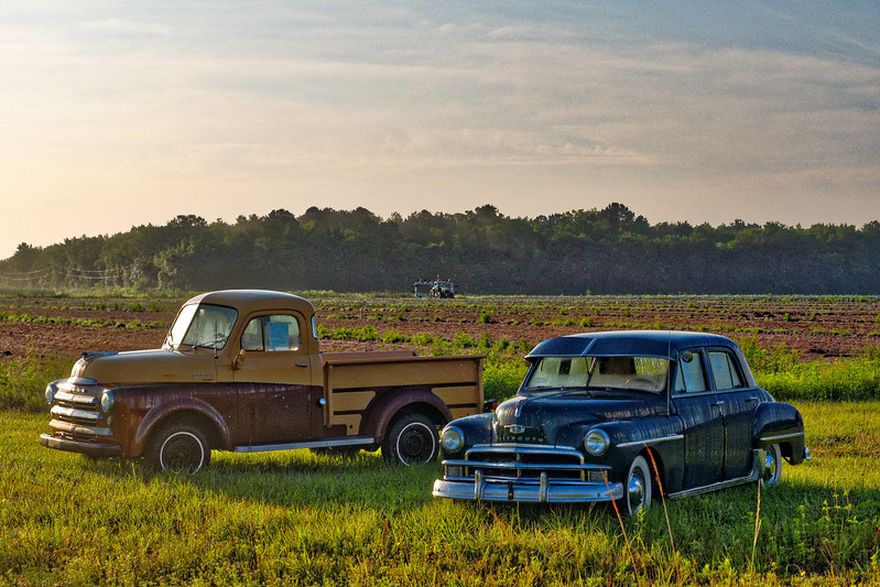 Early 1950s Dodge Truck and 1950 Plymouth
