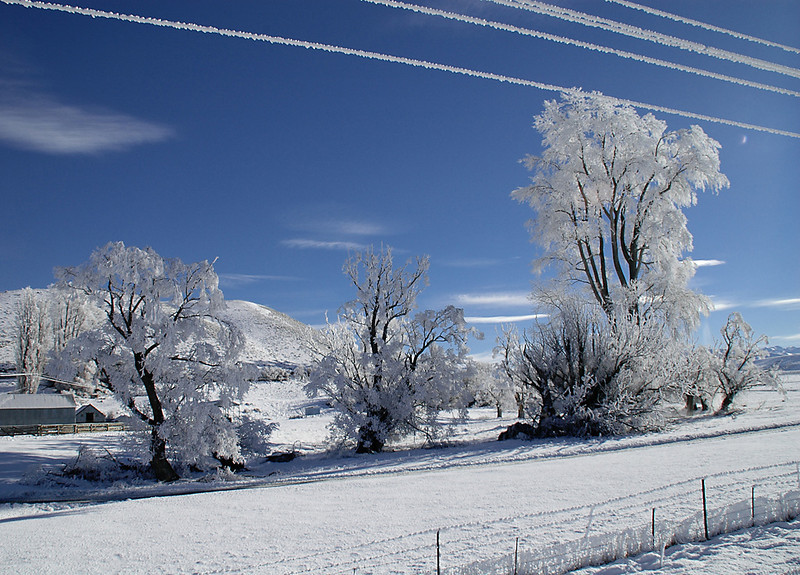 133) Deep Freeze	Lea Worley	WCC		4	3	7<br /> The frosted trees and power lines hint at the bone-chilling cold need to produce this effect.  The stark white against the very blue sky sets up a wonderful contrast of colours.  The tall tree on the right is particularly attractive.  I find the image overall contains too many elements to present a powerful message - farmhouse/shed, trees, fence, power lines.