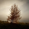 140) Tree Fog	Andy Woods	WCC		4	3	7<br /> Simple striking composition