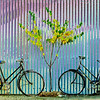 "Wanaka Camera Club_"" 2 Bikes And A Tree ""  by  Jacquie Scott........Total Points = 8<br /> <br /> The post production has not done anything to enhance the image. There are better methods to strengthen the simplicity of this composition. Strong subject, poor execution."