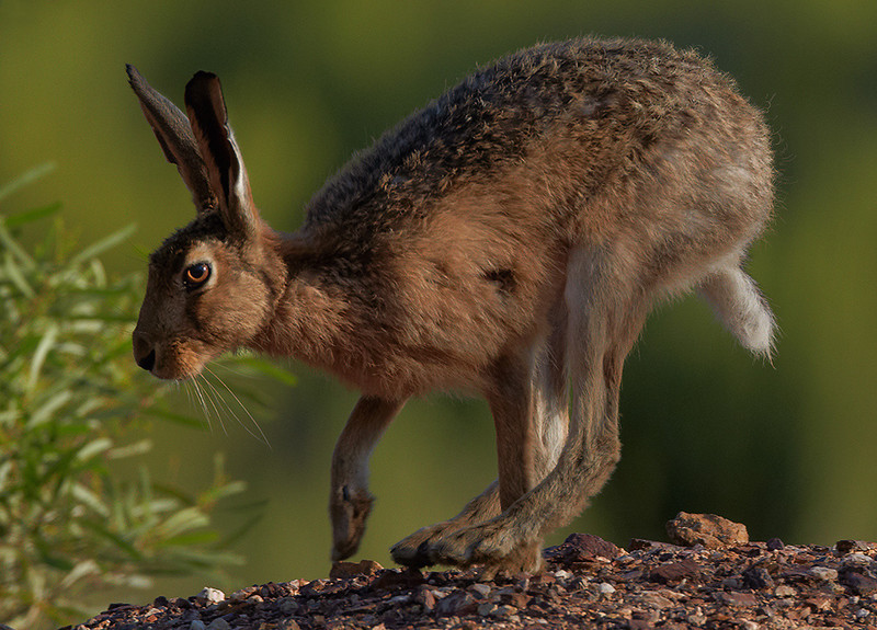 RELCC_129_Hare Today........Total Points = 7<br /> <br /> Really good work!