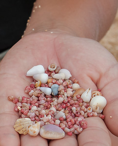 Hawaii 2017; Kauai. Kahelalani shell collectors Hanalei Colony Resort, Lumaha'i Beach