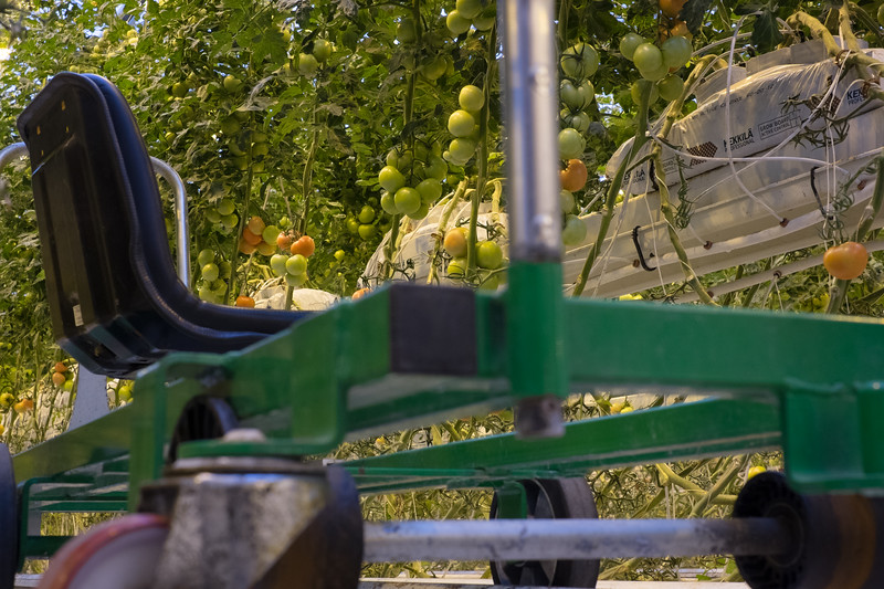 Greenhouse Ride