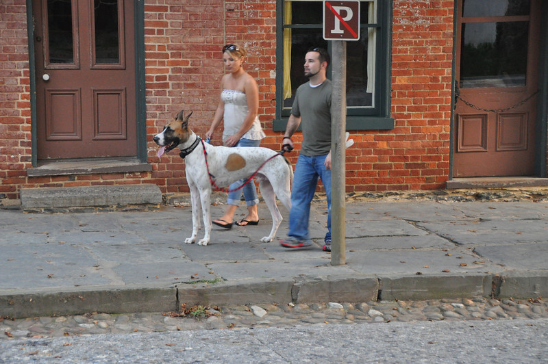 047 one big dog- Harpers Ferry