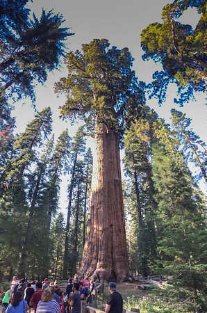 General Sherman Tree - Sequoia and Congress Trail hike with Hilary and Ramneek - Stephanie's photo