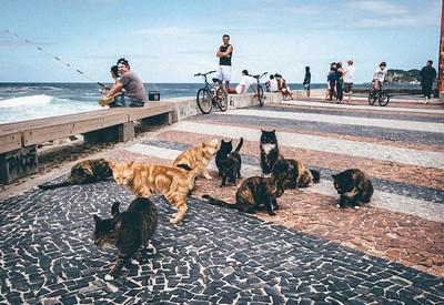 Cat pier? (Rio De Janeiro BRAZIL)