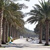 Umm Al Emarat Park, Abu Dhabi, where we found the real  camel.