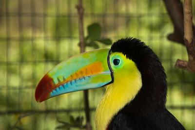 Costa Rica (125 of 104)