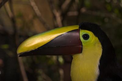 Costa Rica (123 of 104)