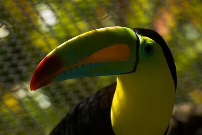 Costa Rica (120 of 104)