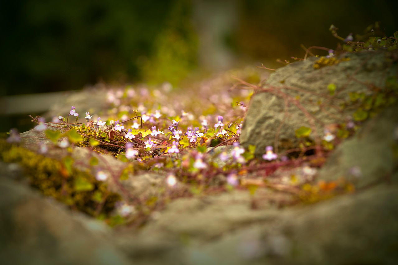 Tiny Blossums