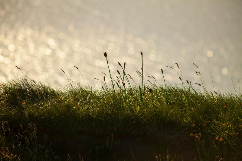 Grassy Cliffs