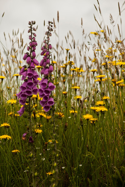Violet and Yellows