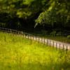 Kilarney Fenceline