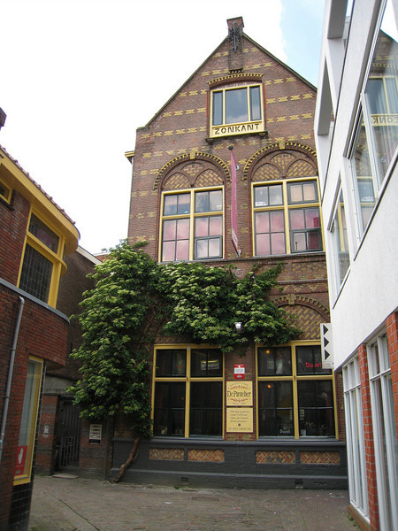 Outside the guesthouse in Groningen, a spectacular climbing hydrangea -