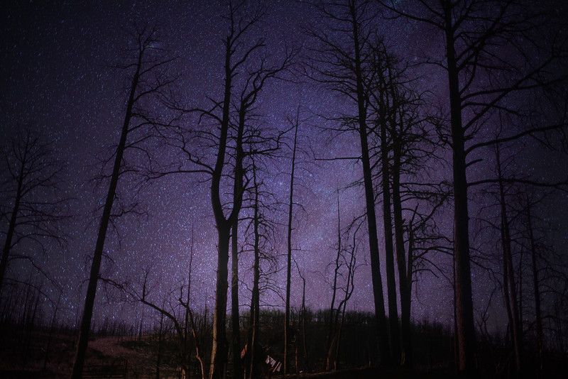 woods n stars