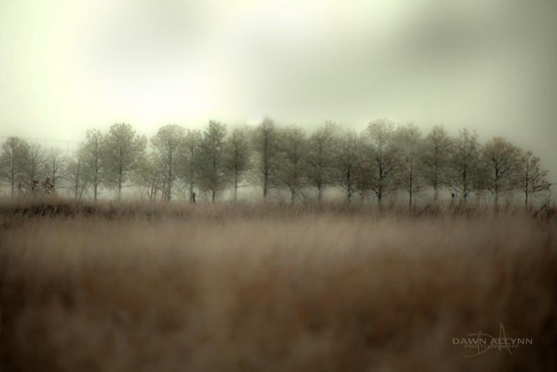 Treeline s