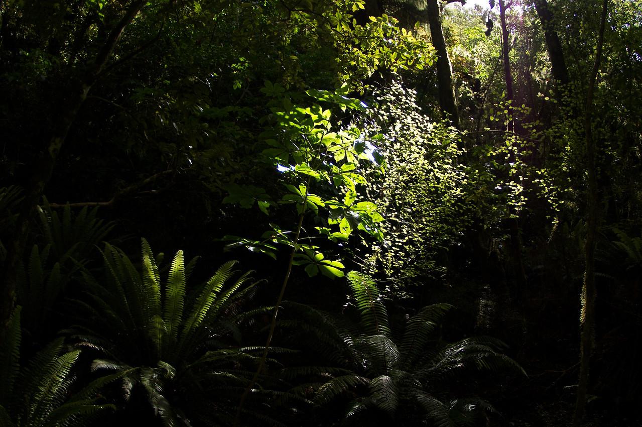 Catlins forest