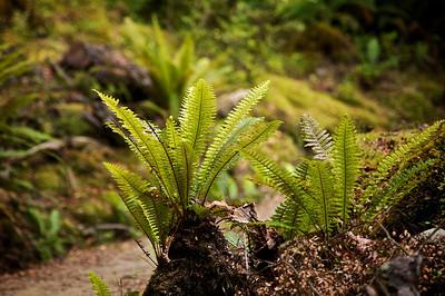 Forest near Te Anau