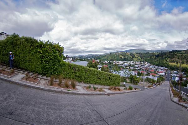 Baldwin St - World's steepest street