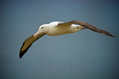 Royal Albatross Centre