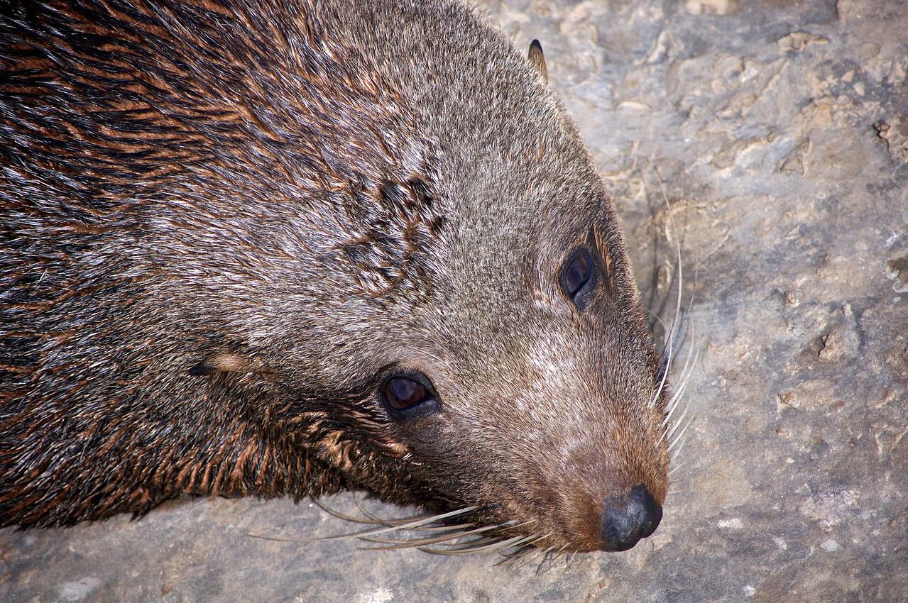 Seal at Shag Point