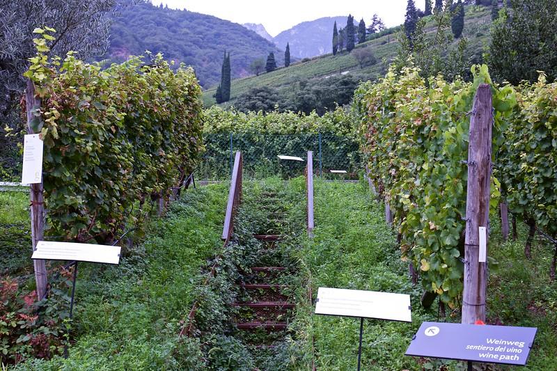 The wine path at J. Hofstätter in Tramin.