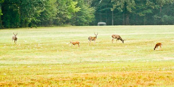 Bucks & fawns